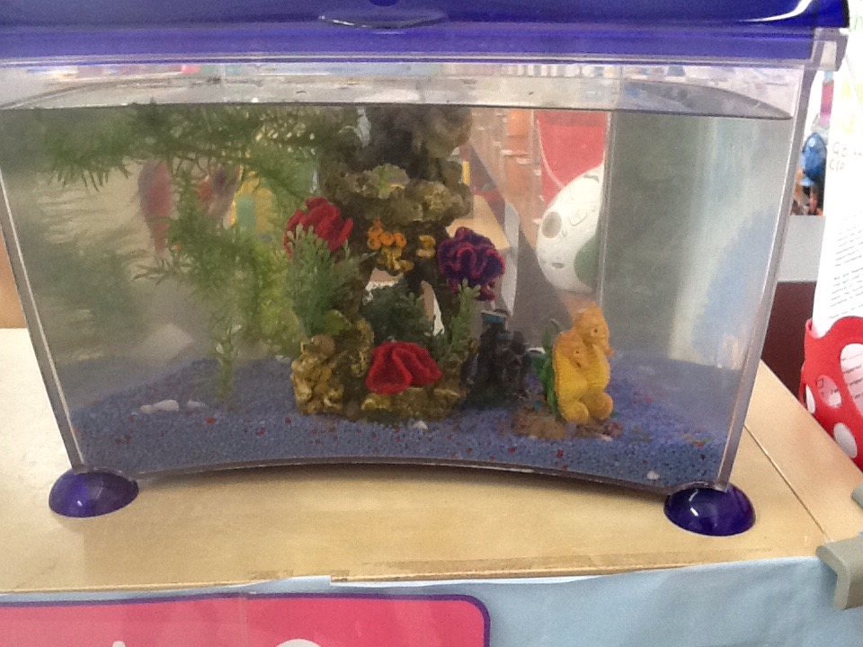 Making fish tanks marlfields primary academy blog for How to make your own fish tank